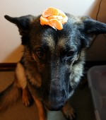 Why is there a pile of orange pieces on my head?